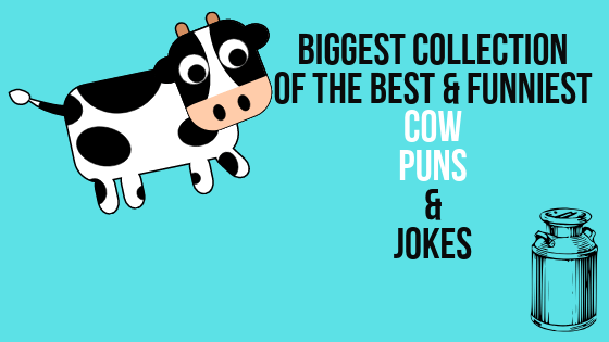 Biggest collection of the best and funniest cow puns nad jokes.
