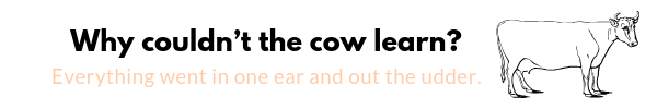Why could not the cow learn? Why did farmers stop telling cow puns? is listed as number 23 on the list of best & funniest Cow Puns